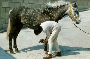 view Examination of the foot of a horse.