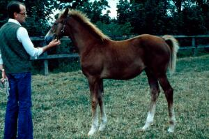view Left side view of a Chestnut foal: the apparent
