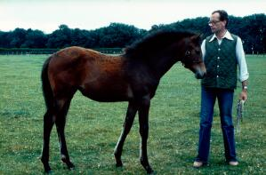 view Side view of a Bay foal: the foal will probably