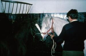 view Foal being kept close to mare's head
