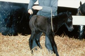 view Correct handling of very young foal