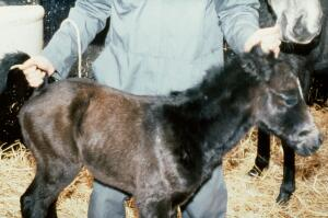 view Foal with each and base of tail held