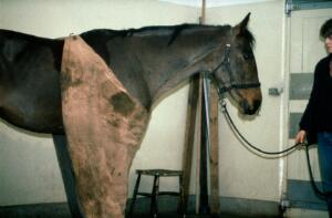 view Stable rug hung like an apron on horse