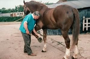 view Examining horse's foot balance
