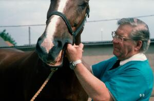 view Checking inside horse's cheeks for ulcers