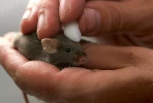 view Mouse health check