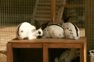 view Pet rabbits.