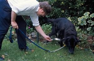 view Domestic pet. Diabetic dog