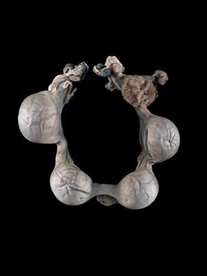 view Early pregnant uterus, feline