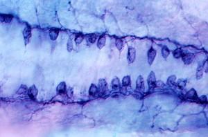 view Zebrafish embryo neurons