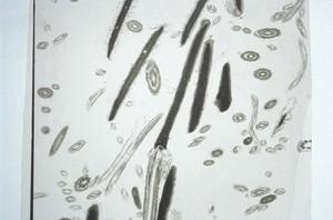 view Normal bovine sperm
