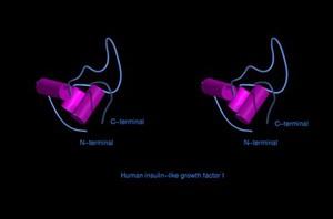 view Human insulin-like growth factor 1,mol.model