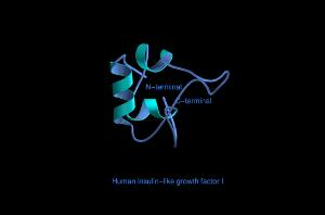 view Human insulin-like growth factor 1,mol.model