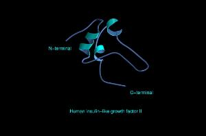 view Human insulin-like growth factor II,mol.mode