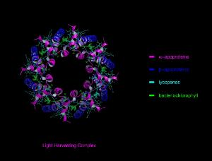 view Molecular model of light-harvesting complex of