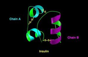 view Molecular model of insulin molecule