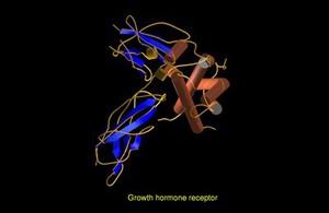 view Growth hormone receptor, molecular model