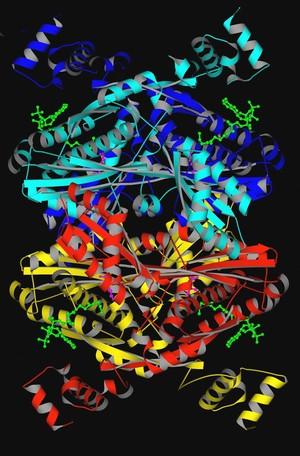 view HMG-CoA reductase