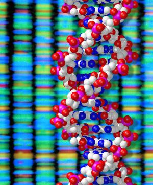 view DNA double helix and sequencing output