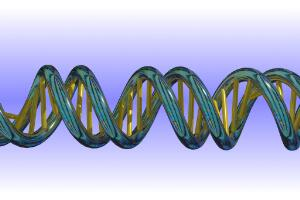 view Model of a DNA double helix according to the correct dimensions of the natural molecule.