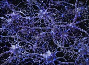 view Neural network