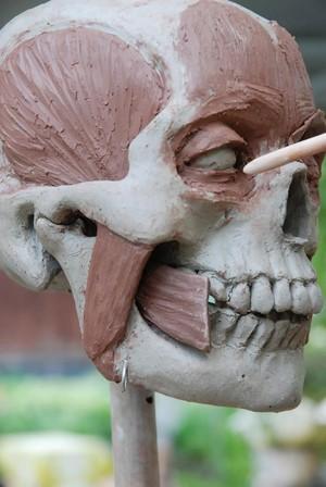 view Skull sculpture