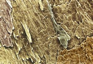 view structure of nail