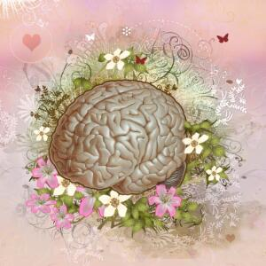 view The brain