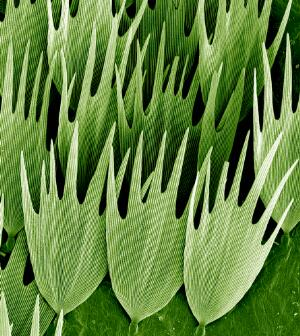 view Moth wing scales