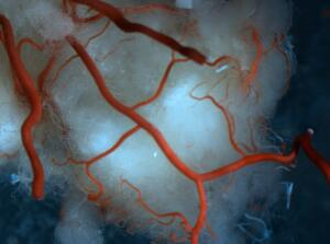 view Vasculature of rat brain