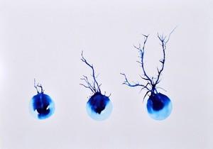 view Neurone development, artwork