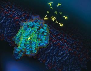 view Antidepressant drug blocking dopamine transporter protein