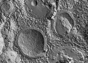 view Yeast cells plasma membrane, Freeze fracture and etching TEM