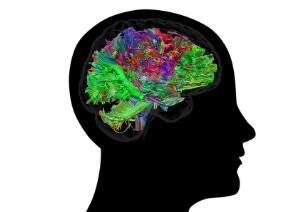 view Healthy adult human brain viewed from the side, tractography