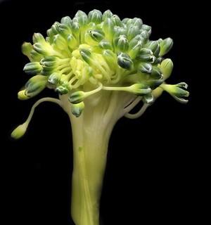 view Broccoli floret
