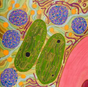 view Partners in crime - chloroplasts and mitochondria