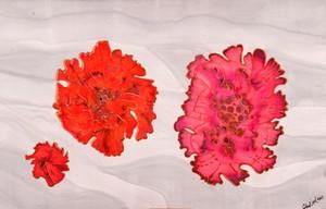 view Pink lichen