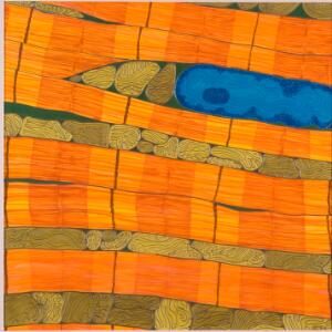 view 'The beating landscape' Cardiac Muscle