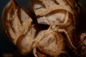 view Insect Molt/Moult
