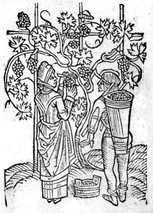 view 15th century. Gathering of herbs
