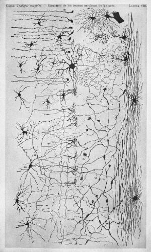 view Brain structures.