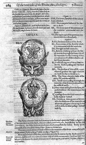 view Brain cross-section, 17th century