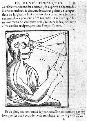 view Descartes: Coordination of muscle and visual mechanisms.