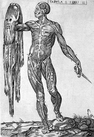 "view Valverde de Hamusco ""Anatomie"": flayed skin"