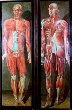view Twelve anatomical figures.