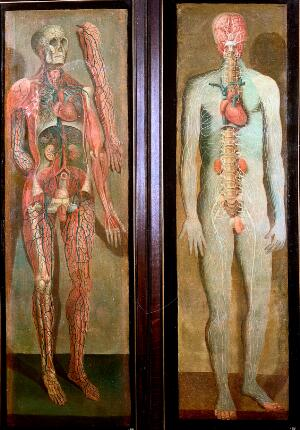 view Two anatomical oil paintings by D'Agoty