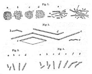 """view Engravings to illustrate """"the atmospheric germ theory""""."""