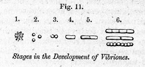 """view Engravings to illustrate """"The atmospheric germ theory"""""""