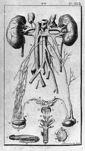 view Male anatomy and reproductive organs