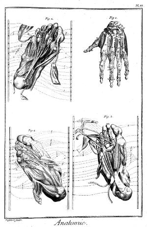 view Muscles- feet and hand.
